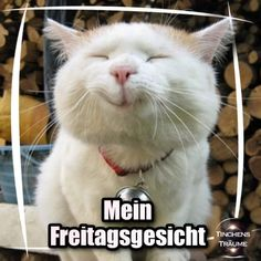 Translated: My Friday face - Good morning, cat and dog . - Lustige humor bilder - Animal world Funny Friday Memes, Friday Humor, Funny Animal Memes, Funny Animals, Funny Memes, Funny Comebacks, Cat Memes, Good Morning Funny Pictures, Job Humor