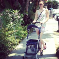 Nice pet stroller. Molly, chihuahua. The Buttons. http://the-buttons.tumblr.com