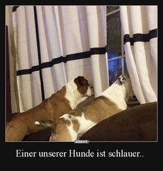 Einer unserer Hunde ist schlauer.. | Lustige Bilder, Sprüche, Witze, echt lustig