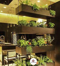 Horta na cozinha: aprenda a plantar os seus próprios temperos