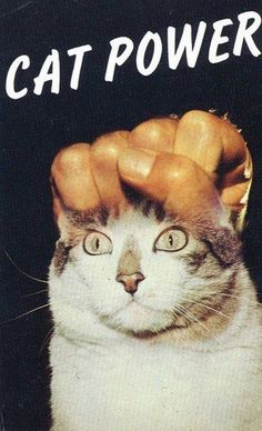 Cat Power!!!