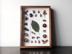 Natural Gallery Nature Collection, Autumn Forest, Acorn, Shadow Box, Dried Flowers, Creative, Display, Frame, Crafts