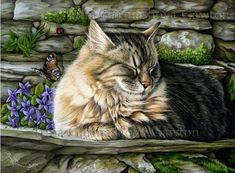 by Irina Garmashova, cat