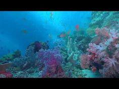 Ocean Reef Aquariums - A Virtual Diving In Tropical Sea And Oceans - YouTube