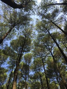 One of favorite thing: Pine forest !