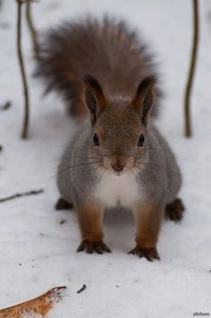 Country Winter with squirrel and snow