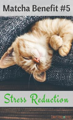 Cat Nutrition Guide Health benefits of matcha powder is amazing. It full of antioxidants and many other nutrients. Vegan Nutrition, Holistic Nutrition, Nutrition Guide, Nutrition Store, Nutrition Plans, Matcha Powder Benefits, Matcha Health Benefits, Healthy Eating Guidelines, Healthy Choices