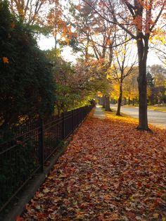 Late Fall, Champaign, Illinois 2012