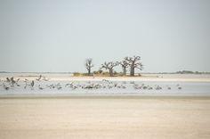 Senegambia- Eine Reise rund um Afrika-34