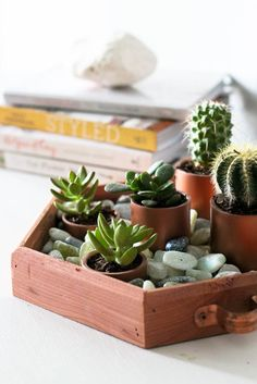 Add some greenery to your indoor space with this lovely succulent garden centerpiece.