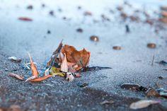 Fall at the beach. #fall #autumn #beach #leaves #leaf #sand #stones #photo #photograph