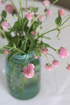 a jar of pink clovers
