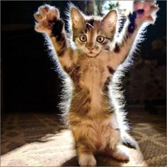 Double #highpaw!! #cute #cats #funny
