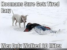 funny dog pictures - Hoomans Sure Getz Tired Eazy  Wez Only Walked 20 Milez