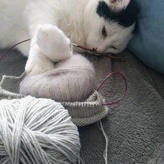 Baby-Hausschuhe (English) | Ines strickt Knit Baby Booties Pattern Free, Baby Knitting Patterns Free Newborn, Crochet Mittens Pattern, Baby Cardigan Knitting Pattern, Knitting For Kids, Baby Patterns, Easy Crochet Socks, Big Knit Blanket, Portfolio