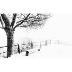 winter__tree__bench_snow_1920x1200.jpg ❤ liked on Polyvore featuring winter