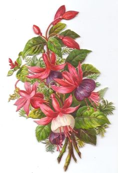 fuchsia flower - Поиск в Google