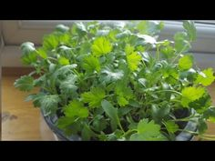 9 Herbs You Can Grow In Water Over And Over Again For Endless Supply - YouTube