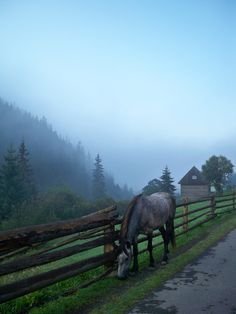 Carpathian mountains at dawn. Ukraine. Everywhere there are people of the horse.
