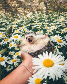Hedgehog enjoying an Array of Flowers Photo by © @mr.pokee