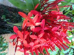 Flores vermelhas ...  ! Que bonitas!