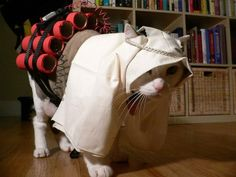 Funny suicide bomber kitty cat costume.