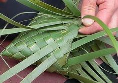 Weaving with Harakeke (NZ Flax) - Vacaza