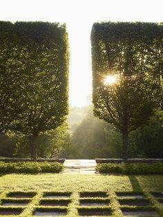 Seto carpe (carpinus betulus) en espaldera. Limitan las vistas desde la altura pero las permiten a nivel de una persona en pie.