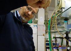 Ivolulivo, il piccolo ulivo mascotte e simbolo di Umbria e Cultura è un piccolo esemplare di Olea Europea riprodotto con la tecnica della micropropagazione