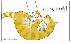 Cat 4 #TheyCanTalk