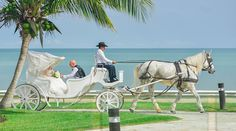 Bride and her father ride down the beach in a fairytale white horse drawn carriage to arrive at the ceremony | Palace Resorts Weddings ®
