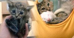 Abandoned Kitten Found alone by hearted family and they adopt it to rescue it. Kitten found abandoned and alone without any care, The poor kitten who have fi. Abandoned, Adoption, Cats, Youtube, Animals, Ferrets, Pets, Left Out, Foster Care Adoption