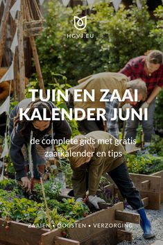 De tuinkalender juni geeft je inzicht voor alle tuinklussen voor moestuin, siertuin, balkon, terras en gazon. Met gratis zaaikalender! Vegetable Garden, Garden Plants, Juni, Buxus, Growing Veggies, Urban Farming, Planting Seeds, Gardening Tips, Greenery