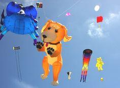 Kite Festival Celebration in Varanasi, Jaipur, Gujarat INDIA