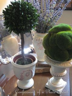 lavender,moss ball,topiary