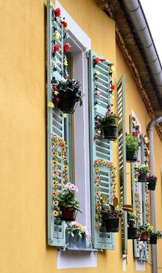 flores nas janelas