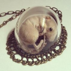 (each to their own I suppose~I would no more wear this than a fur coat.)Taxidermy Kitten Mouse necklace under glass dome. Taxidermy Jewelry, Bone Jewelry, Weird Jewelry, Creepy Houses, Curiosity Shop, Weird And Wonderful, Dark Art, Jewelry Making, Cool Stuff