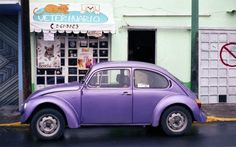 purple bug