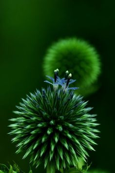 Untitled by Poesie -=- Green is the New Color to Strive for Appreciation in the Beauty of Our Planet ※: Glorious Green, Color Green, Macro, Nature, Green Green, Photo, Garden, Green Flowers