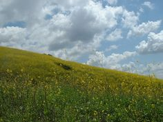 Whittier Hills, springtime. This would be great hung in a room somewhere. <3 I'll always love you Whittier
