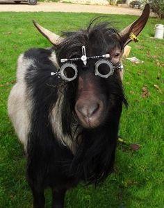 Animals in glasses Optometry Humor, Streetwear, Four Eyes, Wearing Glasses, Aquaponics System, Animal Fashion, Models, Four Legged, Eyewear