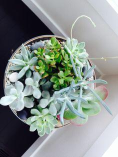 Indoor miniature garden Succulents, Miniatures, Indoor, Garden, Plants, Interior, Garten, Lawn And Garden, Succulent Plants