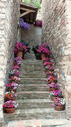 fiorite Stairs with potted plants (petunia & geranium I think). Beautiful idea for front porch stairsStairs with potted plants (petunia & geranium I think). Beautiful idea for front porch stairs Front Porch Stairs, Pot Jardin, Pot Plante, Dream Garden, Potted Plants, Garden Pots, Garden Inspiration, Beautiful Gardens, Container Gardening