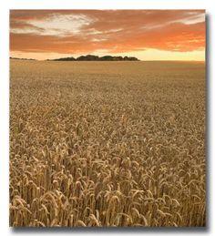 field in Abruzzo