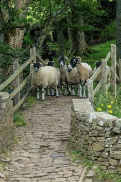 Crossing Over and Back Country life ✿Vida en el campo ✿ Country Farm, Country Life, Country Living, Beautiful Creatures, Animals Beautiful, Farm Animals, Cute Animals, Mundo Animal, Tier Fotos