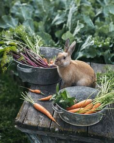 Rabbit's Carrot Patch . Country Life, Country Living, Country Farm, Farm Animals, Cute Animals, Vida Natural, Future Farms, Dream Garden, Belle Photo