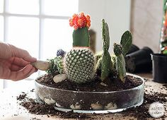 How to Make a Tabletop Cactus Garden | eBay
