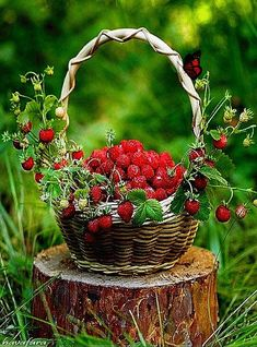 The Art of Happiness - Obst Strawberry Hill, Strawberry Picking, Strawberry Fields, Deco Fruit, Good Morning Gif, Beautiful Fruits, Wild Strawberries, Tile Murals, Weird Food