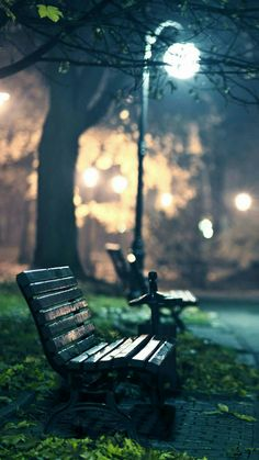 Bench in the park photography.