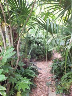Alternative Eden Exotic Garden: The Garden in July